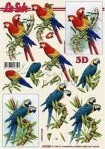 Papagáj, Fázisos 3D