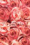 Kreatív hobby - Transzparens papír - Rózsa mintás