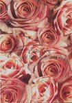Kreatív hobby - Kartonpapír - Vörös Rózsa, Karton