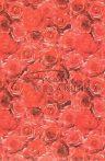 Rózsa, domborkarton