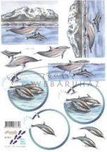 Delfinek, Fázisos 3D