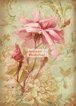 Dekupázs rizspapír A4 - Antik rózsa