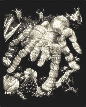 Kreatív hobby - Tarantula