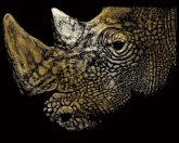 Képkarcoló készlet karctűvel - 20x25 cm - Arany - Orrszarvú