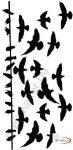 Fekete falmatrica - Madarak - Állatos #70