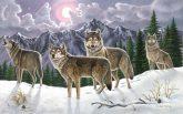 Kifestő készlet számokkal, ecsettel, felnőtteknek - 30x40 cm - Farkasok