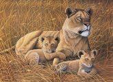 Kreatív hobby - Afrikai oroszlán