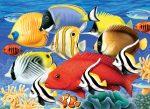 Kreatív hobby - Trópusi halak