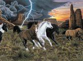 Kreatív hobby - Számos kifestő készlet, 30x40 cm - Vadlovak viharban