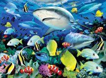 Kifestő készlet akrilfestékkel, ecsettel, gyerekeknek - 30x40 cm - Számos kifestő készlet - Cápák a