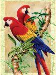 Kifestő készlet számokkal, ecsettel, gyerekeknek 8 éves kortól - 20x25 cm - Papagájok