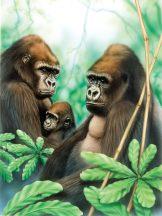 Kifestő készlet akrilfestékkel, ecsettel, gyerekeknek 8 éves kortól - 20x25 cm - Gorilla család