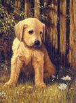 Kreatív hobby - Akril kifestő számokkal - Kutya a fűben