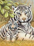 Kifestő készlet gyerekeknek - 20x25 cm - Fehér tigrisek