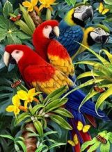 Kreatív hobby kifestő számokkal - Ara papagájok