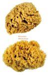 Kreatív hobby - Festőszivacs - Royal XL Sponge - természetes tengeri szivacskészlet, 2 db-os készlet