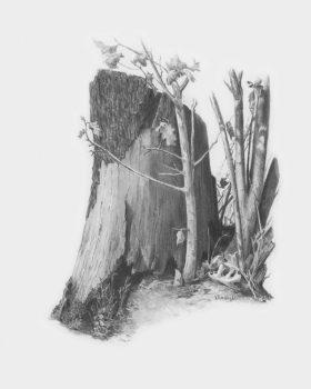 Kreatív hobby - Farönk