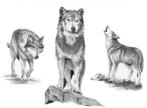 Kreatív hobby - Farkasok