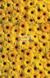 Virágos mintás transzparens papír